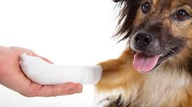 emergency care for a dog and pet in general