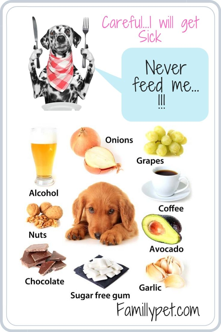 The best food for my dog and What is the dog's favorite food?