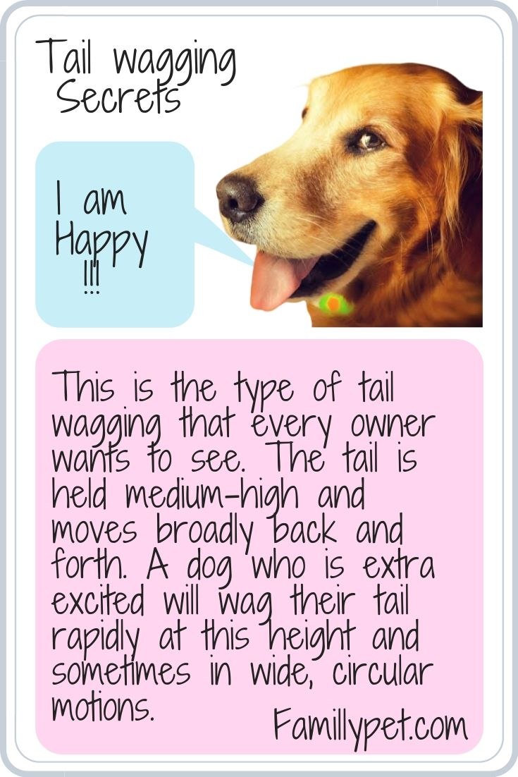 help frightened dog to become happy