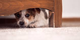 how to help scared dog overcoming his fear