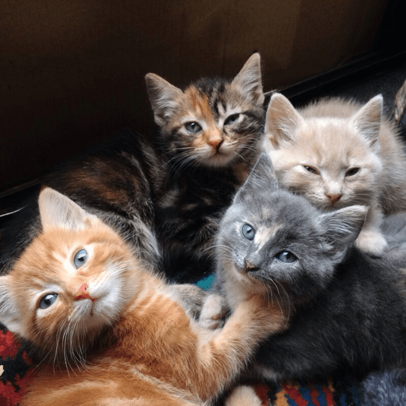 which kitten to choose