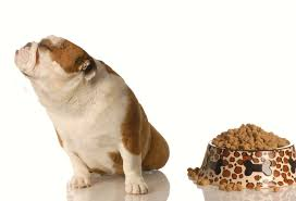 Are Kibble a good option for your puppy ?