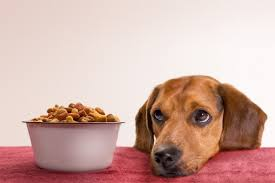 are kibbles good for my puppy's health ?