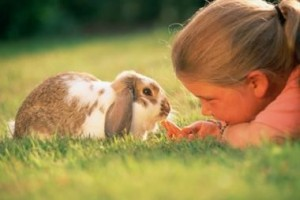 adopt a bunny , all the tips