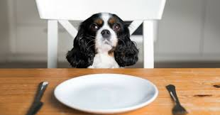 how much food to prepare for your dog