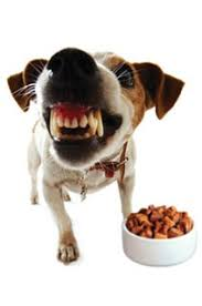 Food that puppies loves to eat