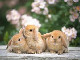 how many bunnies is better to adopt
