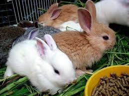 how to choose the right pet Bunny