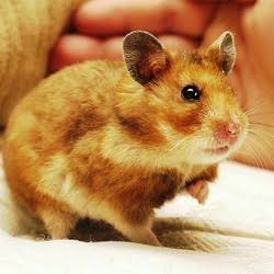 What if your sick hamster is dead?