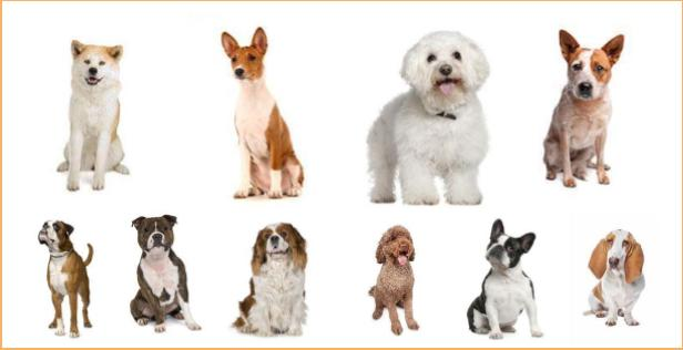 how to choose the right dog breed , Gender and Age