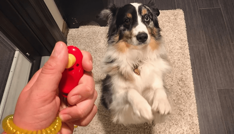 What Clicker training is and How to use a Clicker to Train a Dog Or a Puppy ?