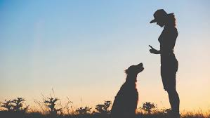 Is obedience training important for dogs