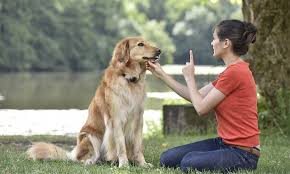 why every dog should be trained