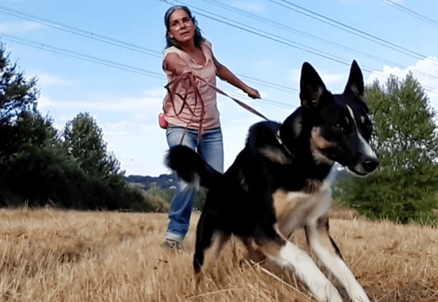 favourite obedience dog training online