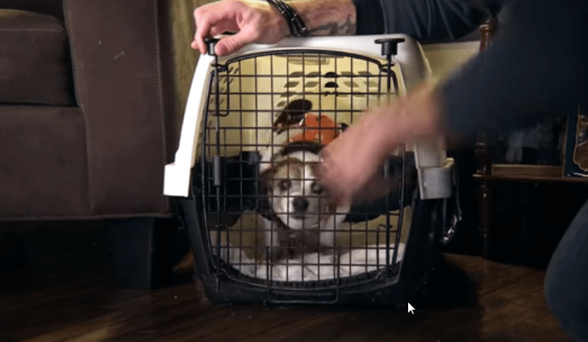 the easiest way to crate training a new puppy