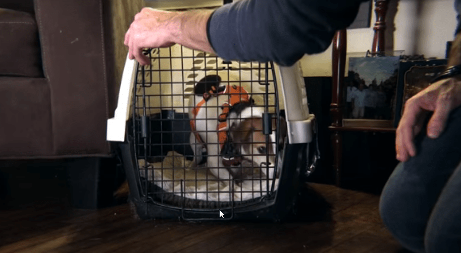 how to get my new puppy used to its crate