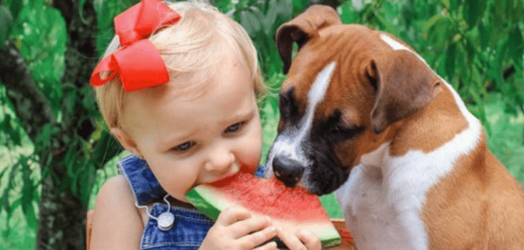 what fruits can dog or can't he eat ?