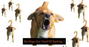 do dogs get tired of barking ? I have had it