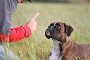 Best behaviour dog training