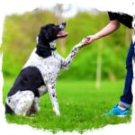 the best obedience training for dogs and puppies