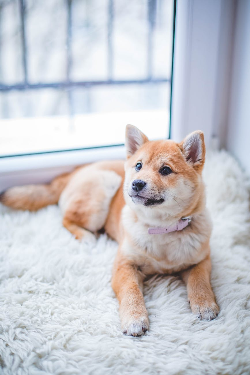 do dogs stop barking quickly ? and what to do to help them ?