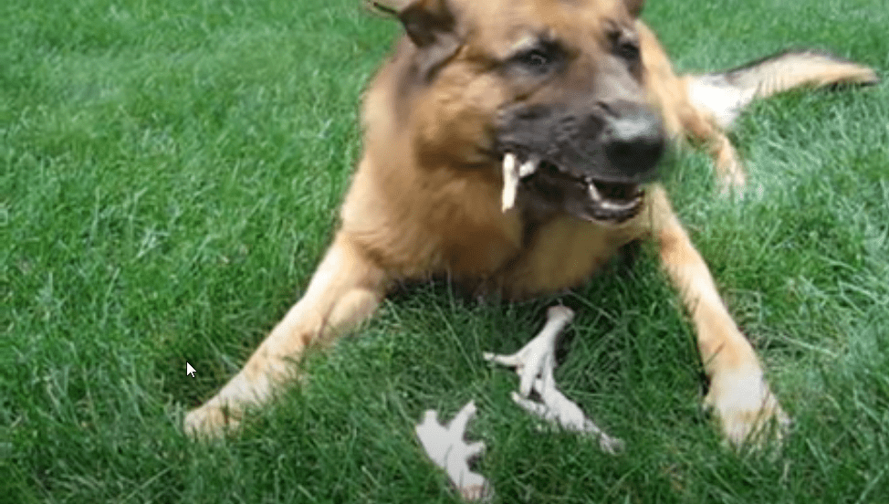 are chicken feet good for dogs ?