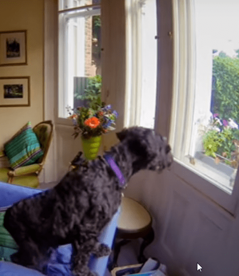 can dogs stay alopne home all the day ?