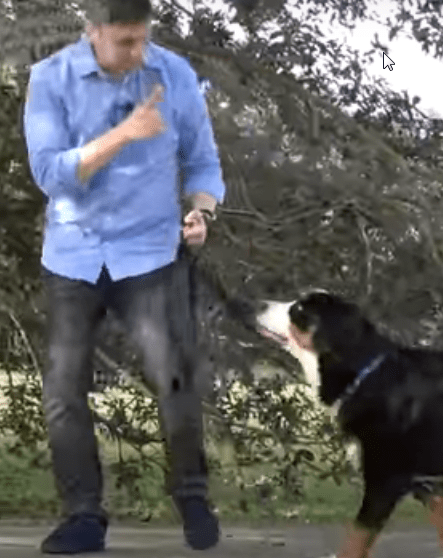 teach your dog to walk on a leash without pulling on it