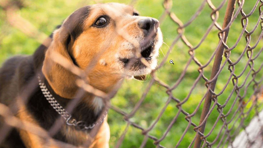 what can we do when dogs wont stop barking ?