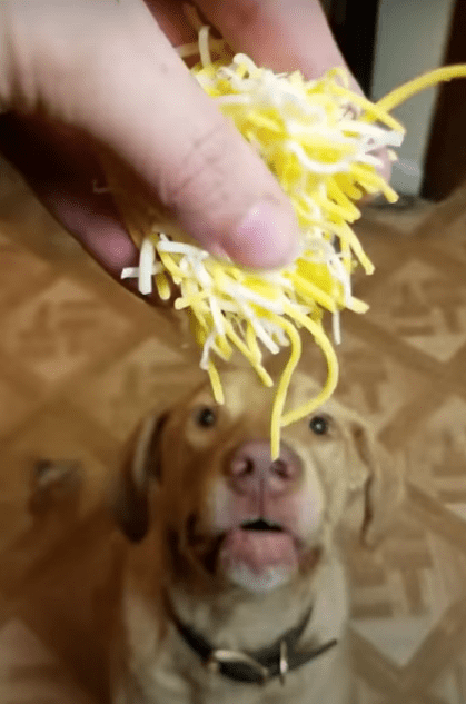 Can dogs have cheese ?