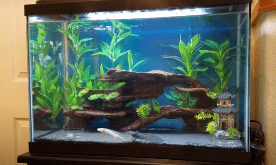 what do axolotls need and tank set up