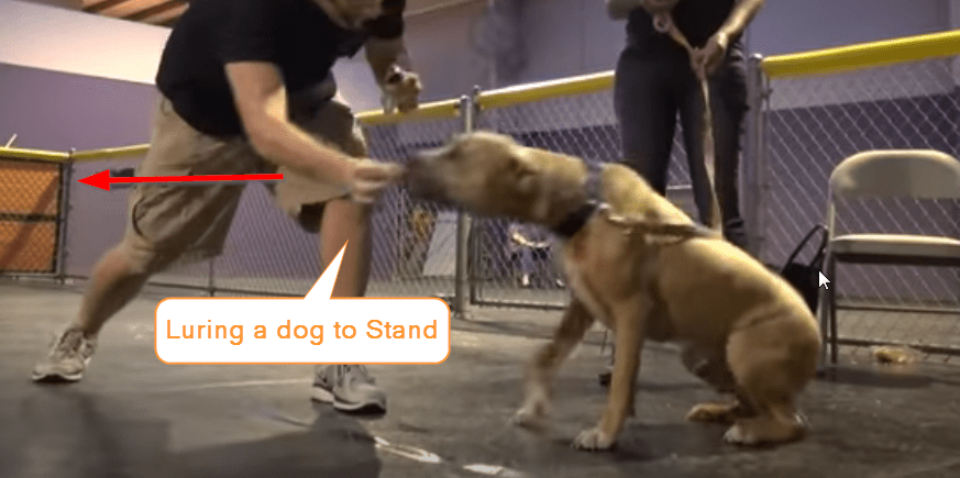 traing a dog to stand up