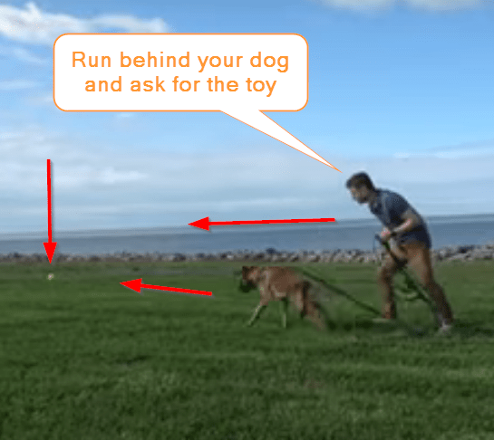 tech a dog to bring back a toy when you throw it