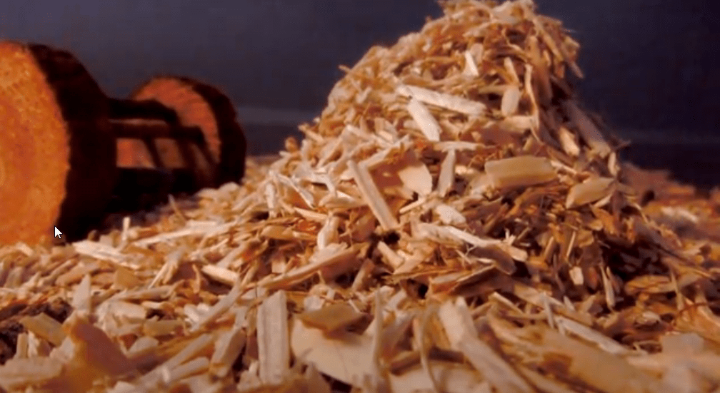 How to prevent my guinea pig from catching cold ?