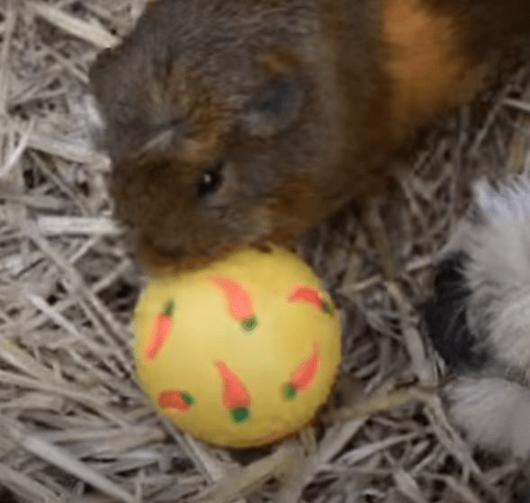 Tips to keep my guinea pig warm during the winter months.