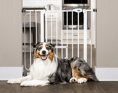 2020 12 01 01 11 33 CARLSON PET PRODUCTS Extra Wide Walk Thru Gate with Pet Door Chewy.com 1