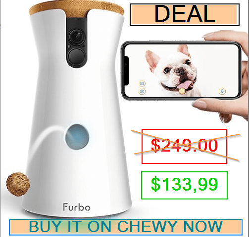 automatic feeder for dogs and cats