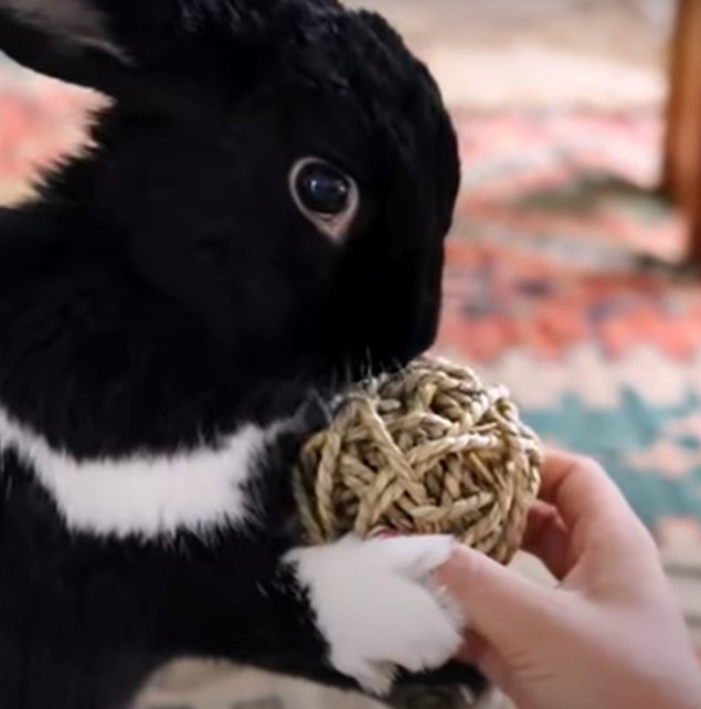telling a rabbit we love him by giving gifts and toys