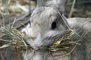 what do bunnies chew on ?