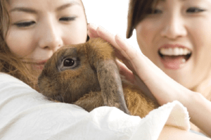 best breed of rabbits for first time and beginners