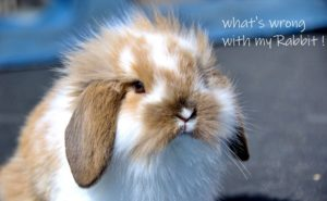 common rabbit diseases and their symptoms
