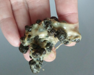 Rabbit poop covered by mucous