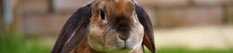 how to tell and what to do if my rabbit is sad , mad or stressed ?