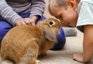 rabbits good pets for kids 1