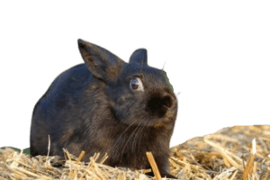 recognizing mad rabbit and helping him