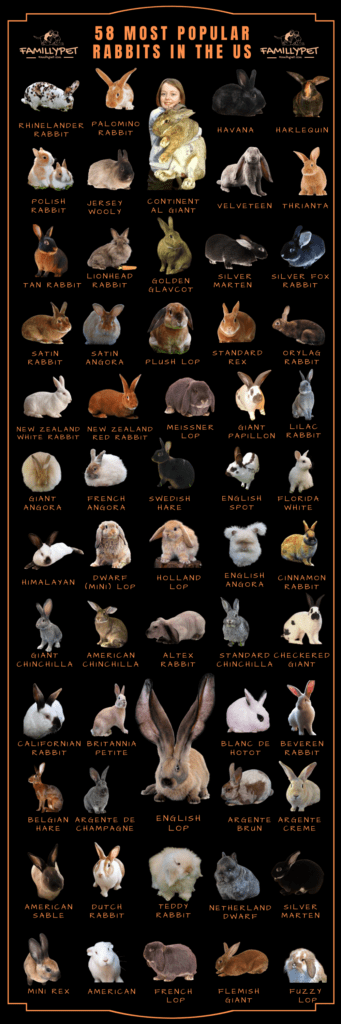 rabbit breed chart with pictures