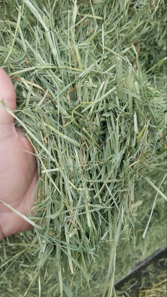 what is the best hay for rabbits and how to choose it ?
