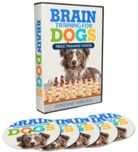 brain training for dogs 1