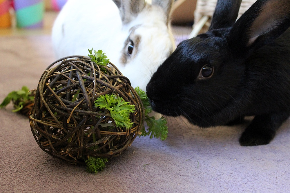 ideas to keeping my bunny busy and not bored