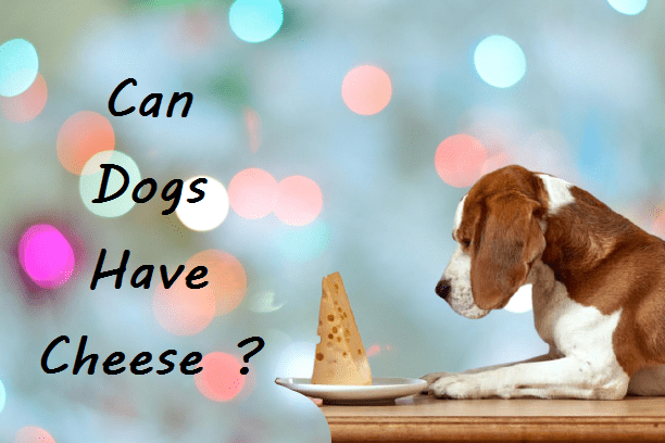 can dogs eat cheese : all you need to know?